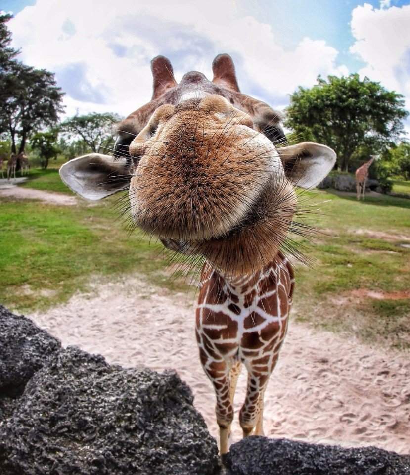найти смешные картинки про животных делаю индивидуальные визитки