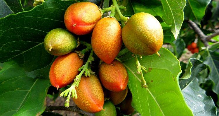 10 фруктов, которых большинство из нас не то что не пробовали, а даже не видели