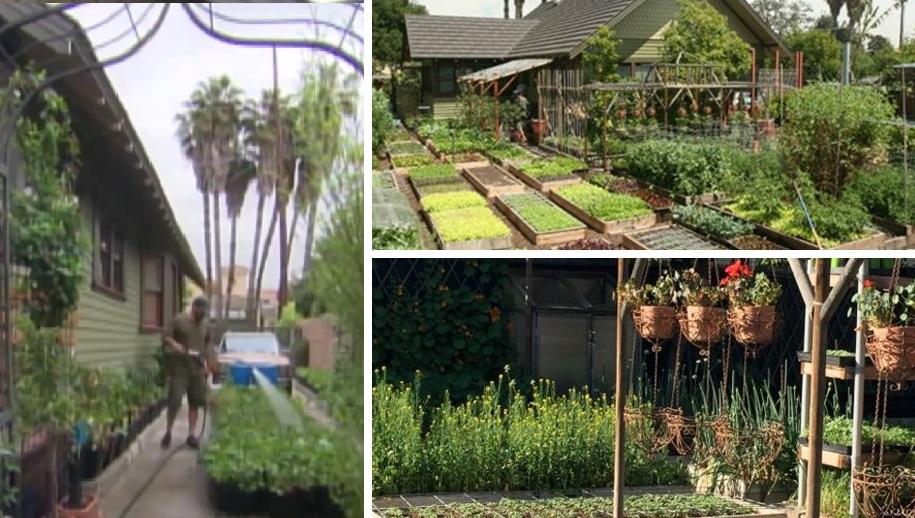 С шести соток фермер выращивает грандиозные урожаи: кормит всю семью и еще на продажу остается