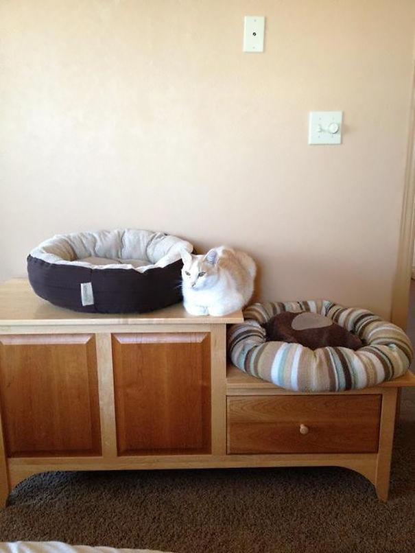 ВЕСЁЛЫЕ МИНУТКИ. О подарках для котов