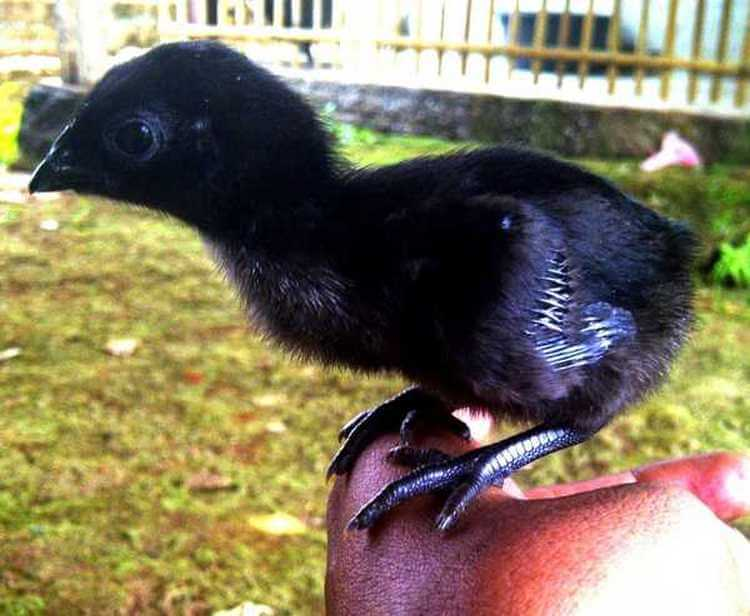 Фермер нашел странные яйца черного цвета – посмотрите, что вылупилось из них.
