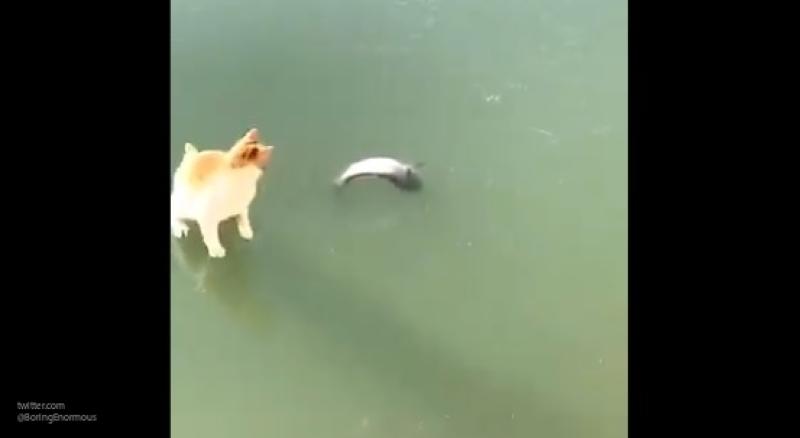 Кот пытался достать вмерзшую в лед рыбу и попал на видео