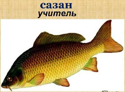 Рыбалка - Сазан «Учитель»