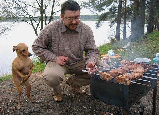 Эти собаки так трогательно в…