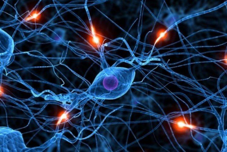 Может ли человек восстанавливать части своего тела? биология,здоровье,клетки человека,наука,органы человека,человек