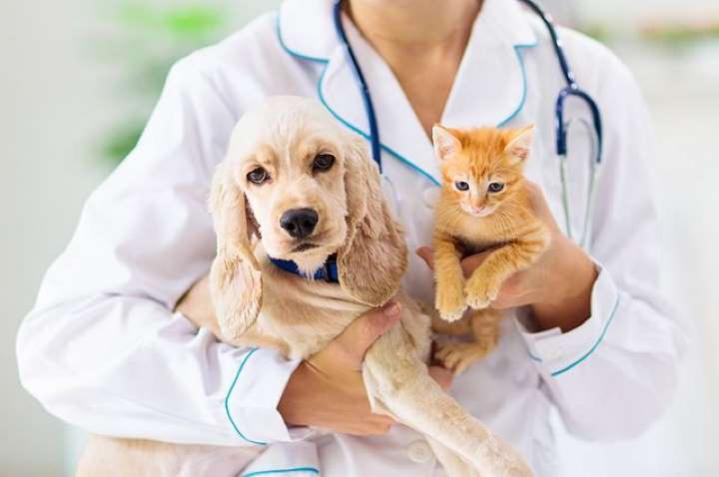 Учёные выяснили, какие домашние животные могут заражаться коронавирусом