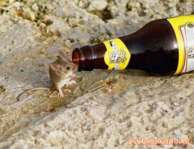 Попала мышь в пивной бочонок... :)