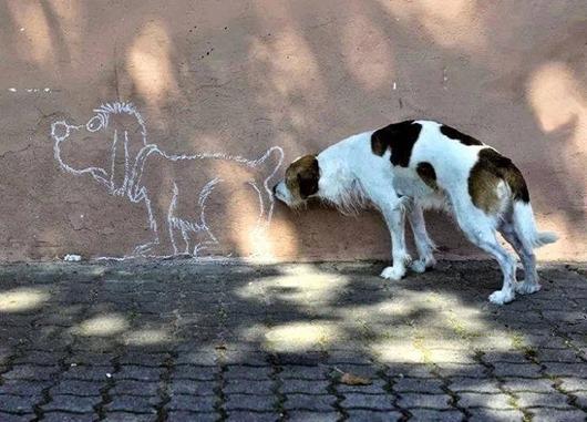 cachorro cheira desenho