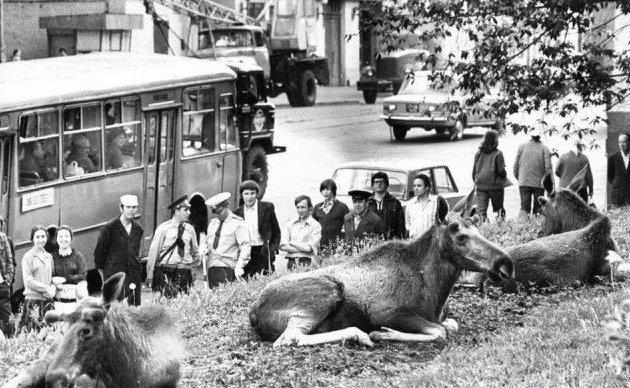 Лоси на Преображенской улице в Москве, недалеко от парка «Сокольники». 1979 год история, ретро, фотографии