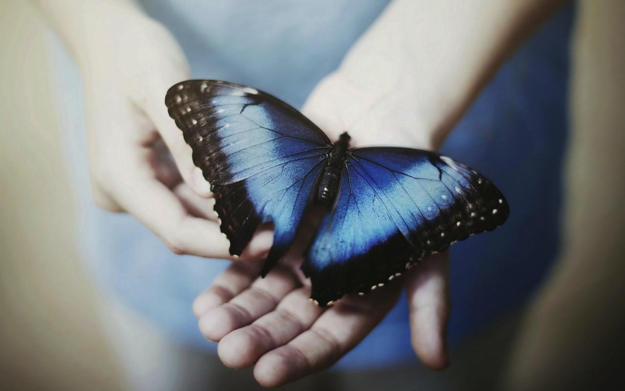 Притворись, что читал: « Звездная бабочка» Бернар Вербер