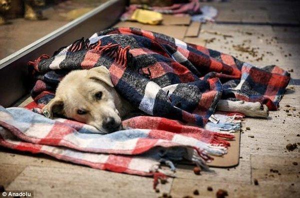 Что происходит с бездомными …