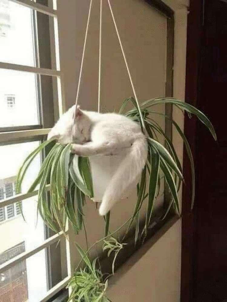 Котики, для которых нет преград для сна