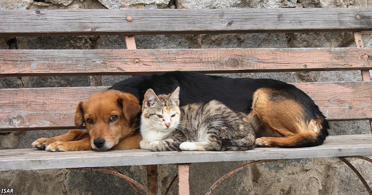 Бросил собаку? Вышвырнул из дома котенка? Плати €10 тыс. или садись в тюрьму!