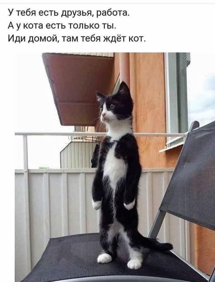 https://mtdata.ru/u21/photo73BB/20952733182-0/original.jpeg#20952733182