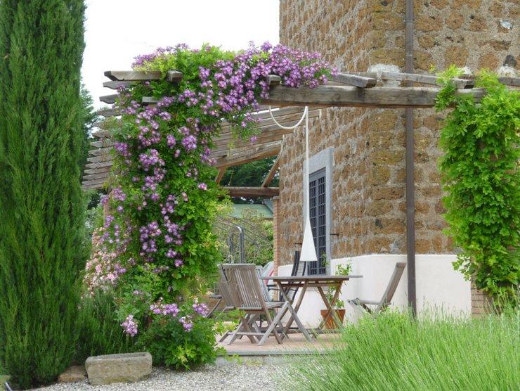Вьющиеся растения для сада и дачи