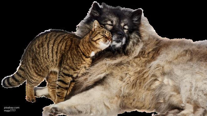 """Центр реабилитации """"Юна"""" проведет выставку, на которой пристроит кошек и собак из приютов"""