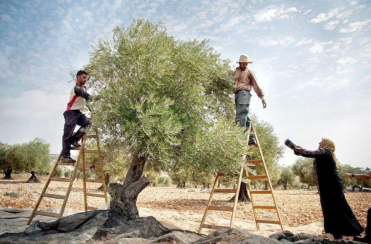 Они занимаются агроальпинизмом в мире, люди, обычай, правила, русские, традиции, тунис, факты