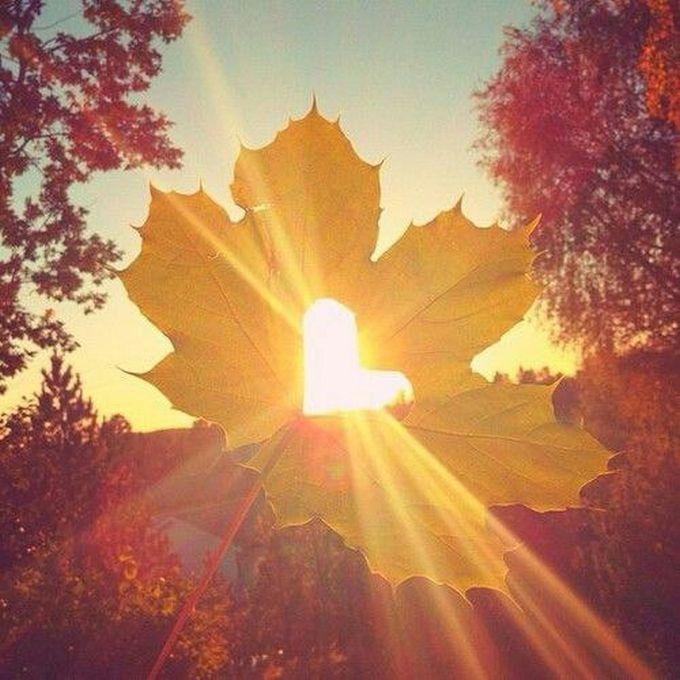 С добрым утром солнце картинки красивые осенние
