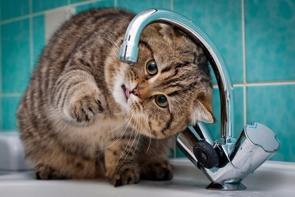 На кота моего льющаяся вода действовала завораживающе. До поры, до времени...