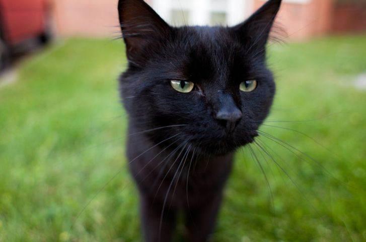 Домашние обязанности любого уважающего себя кота )))