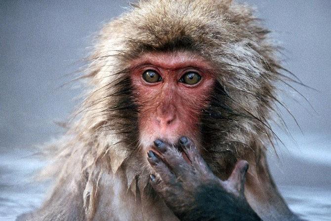 "Привет, запутинские ""приматы""! uspehrussia"