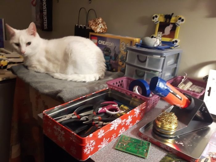 """""""Кот обожает смотреть за тем, как я работаю. Теперь у него есть даже спальное место в моем кабинете"""" животные, кот, коты, кошки, приколы с животными, смешно, фото, юмор"""