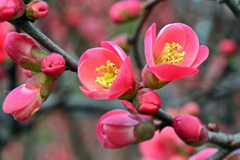 Весна в Крыму: цветущие растения