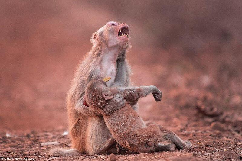 Необычайно чувственный снимок удалось запечатлеть индийскому фотографу, передающий всю боль материнской утраты