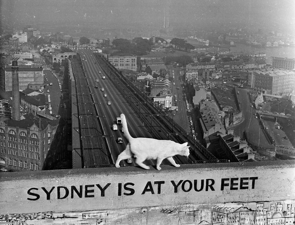 Наверху Сиднейского моста Харбор в Австралии