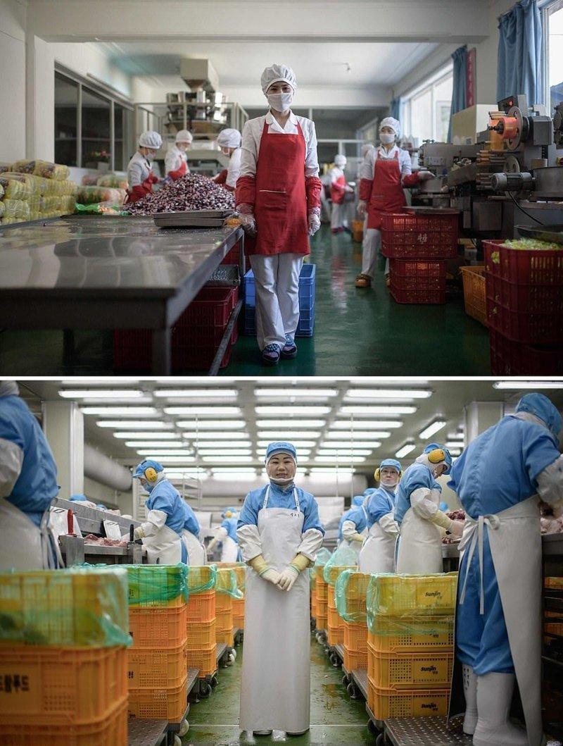 Вверху — 27-летняя работница пищевого предприятия недалеко от портового города Вонсан, Северная Корея. Внизу — 49-летняя женщина, работающая на заводе Spam, Сеул кндр, люди, северная корея, сравнение, страны, южная корея