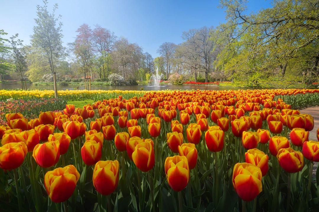 Прогулка по сказочному цветочному саду Кёкенхоф Нидерланды,тюльпаны,цветы