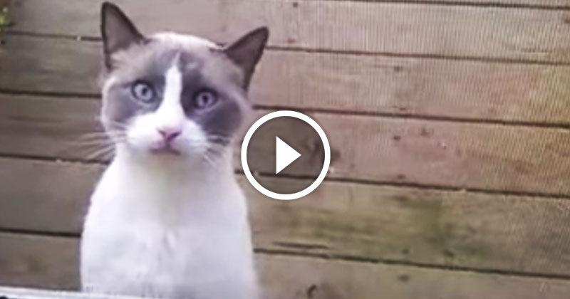 Когда на тебя накричал — кот!