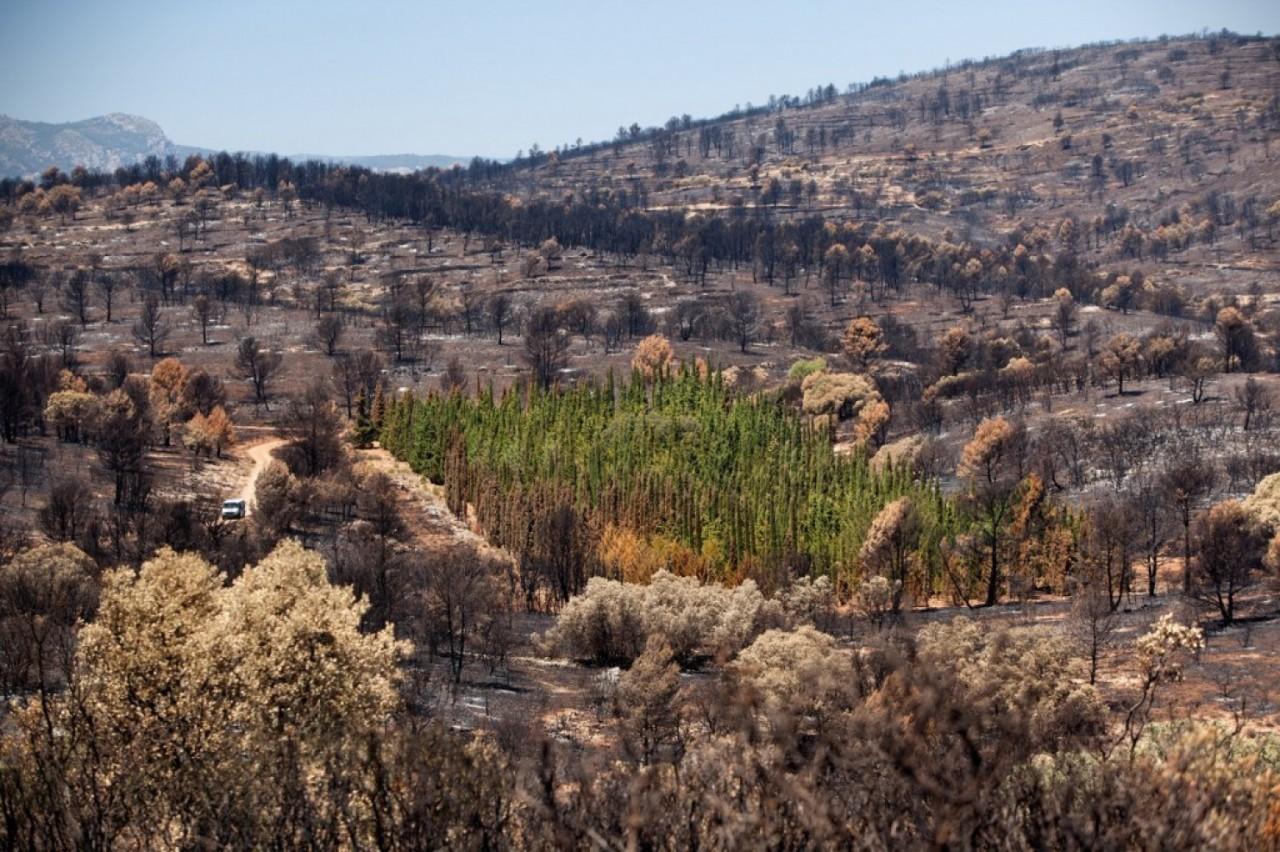 Кипарис — дерево, которое не горит