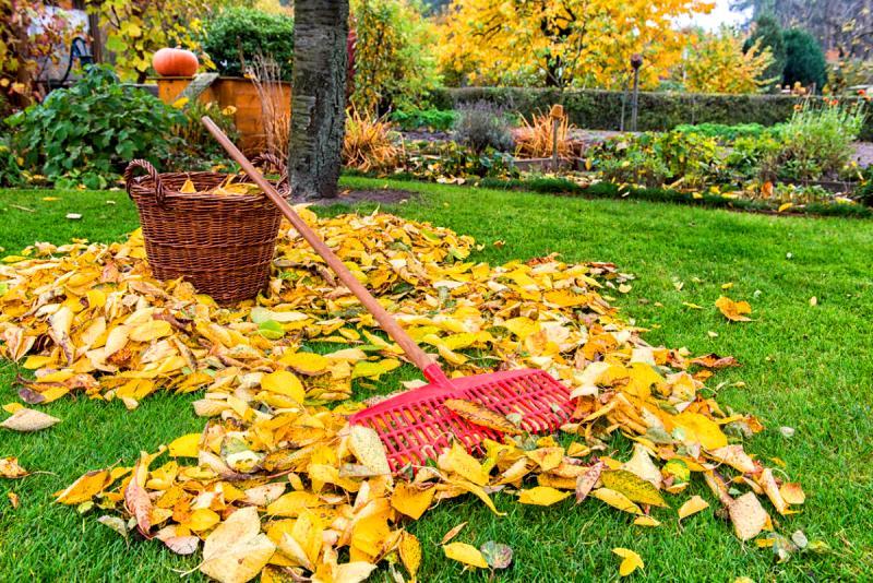 Что надо сделать в саду осенью?