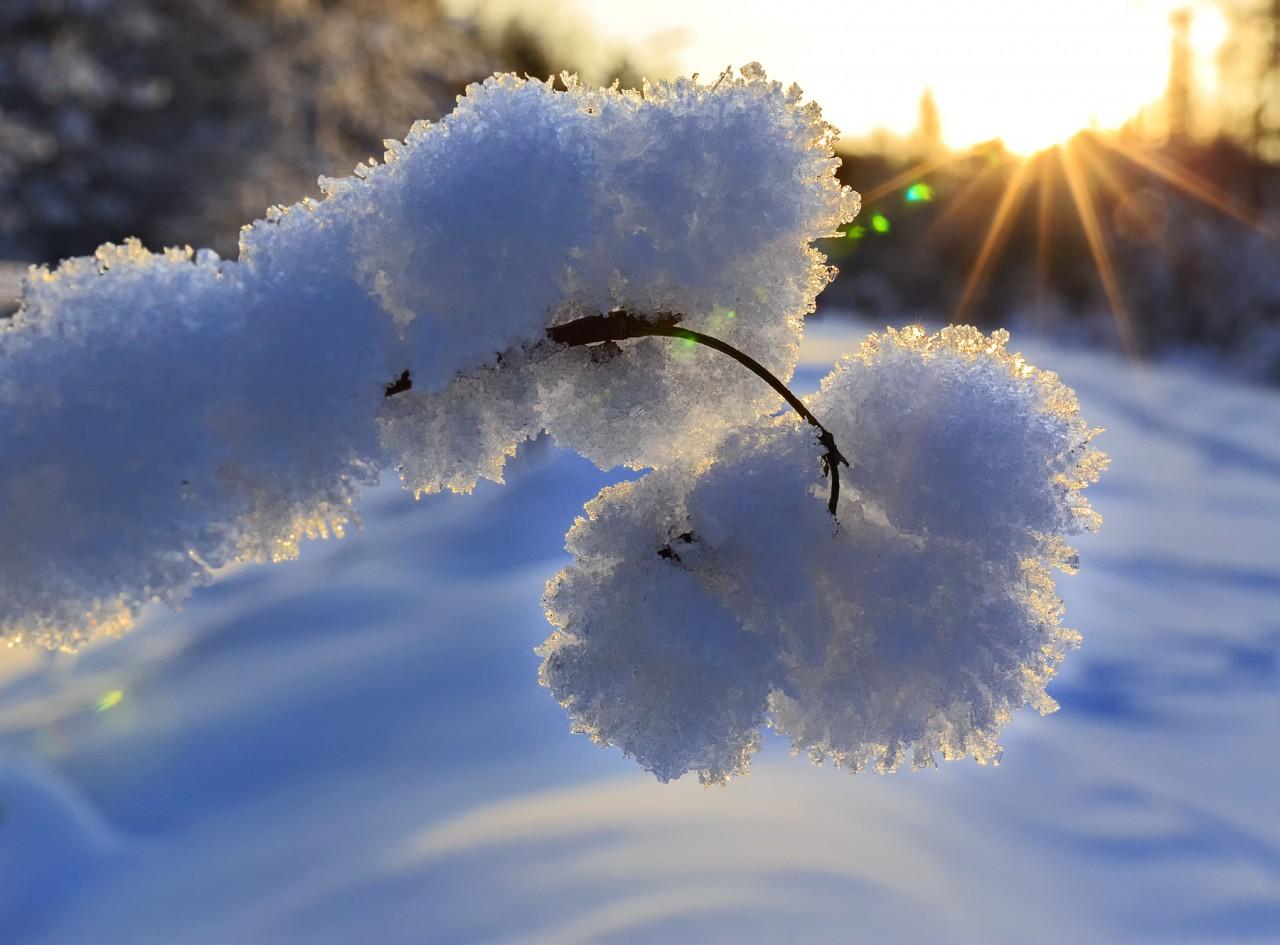 Ветка в снегу. Фотограф Михаил Байбородин