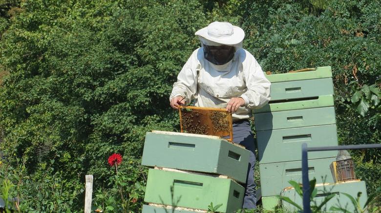 Вещий сон и пчелы. История от нашего читателя