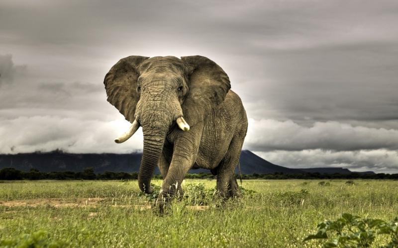 Слон в случае басня, крылов