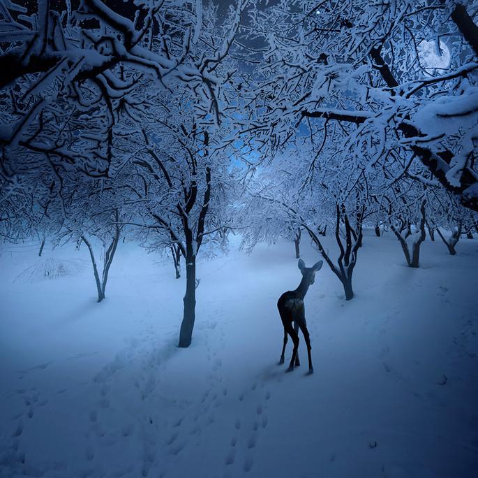 Олененок стоит, обернувшись, в зимнем лесу