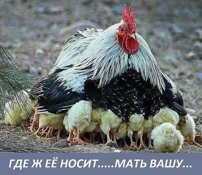 4809770_UMyjik5_1_ (700x604, 99Kb)