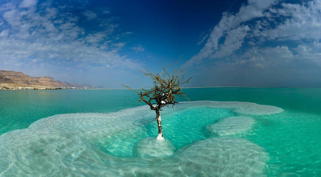 Это дерево было посажено около года назад в виде арт-объекта. Но самое интересное, что оно прижилось и теперь растет прямо в море