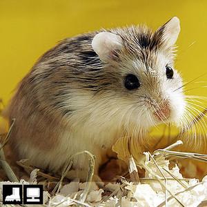 Как выбрать домашнее животное в зависимости от типа твоего характера и размеров жилплощади домашние животные,наши любимцы
