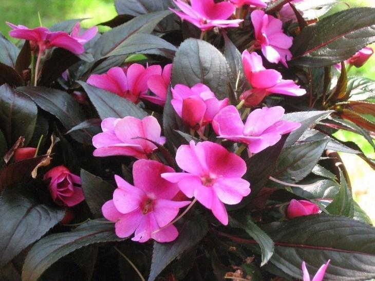 11 неприхотливых комнатных цветов, цветущих круглый год комнатные растения,цветоводство