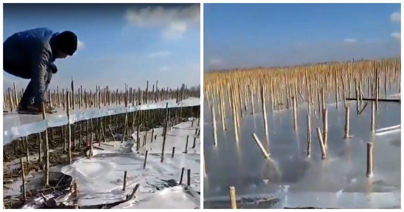 Зачем пробку вытащили? Лёд, под которым практически не осталось воды в мире, видео, вода, интересно, лед, река, явление