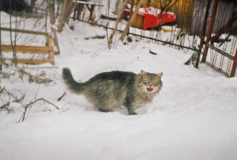 Колоритные уличные коты