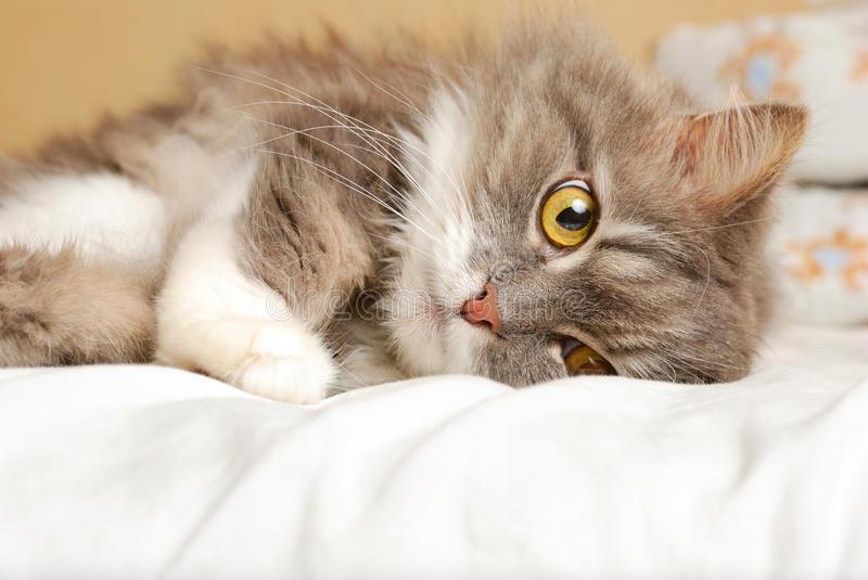 Кошки, которые легли в тех м…