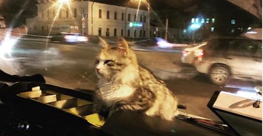 Замерзшая кошка запрыгнула в…