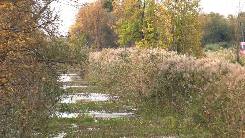 Шестилетняя девочка утонула в Калининградской области Происшествия