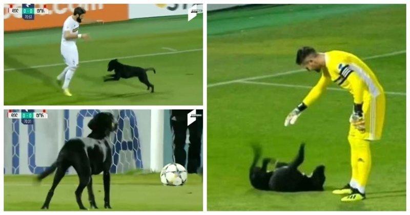 Жизнерадостный пёс прервал футбольный матч в Грузии видео, грузия, животные, милота, прикол, собака, спорт, футбол