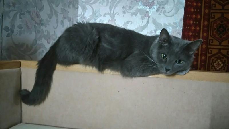Под дверью сидел раненый кот и с мольбой смотрел на выходящих из квартиры людей