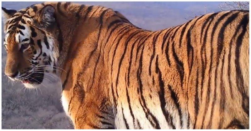 Фотоловушка в Приморье засняла сразу семь различных видов диких животных